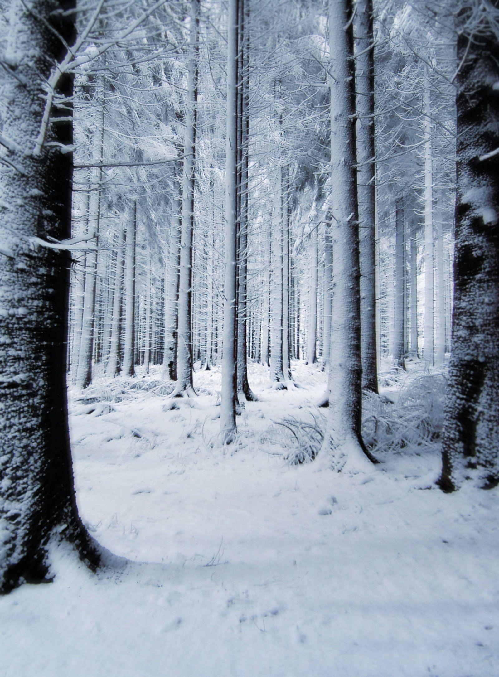 Snow Backgrounds Wallpaper Cave