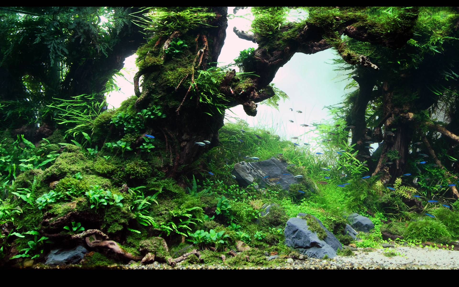 Aquarium Backgrounds 35 Desktop Background | WallFortuner.