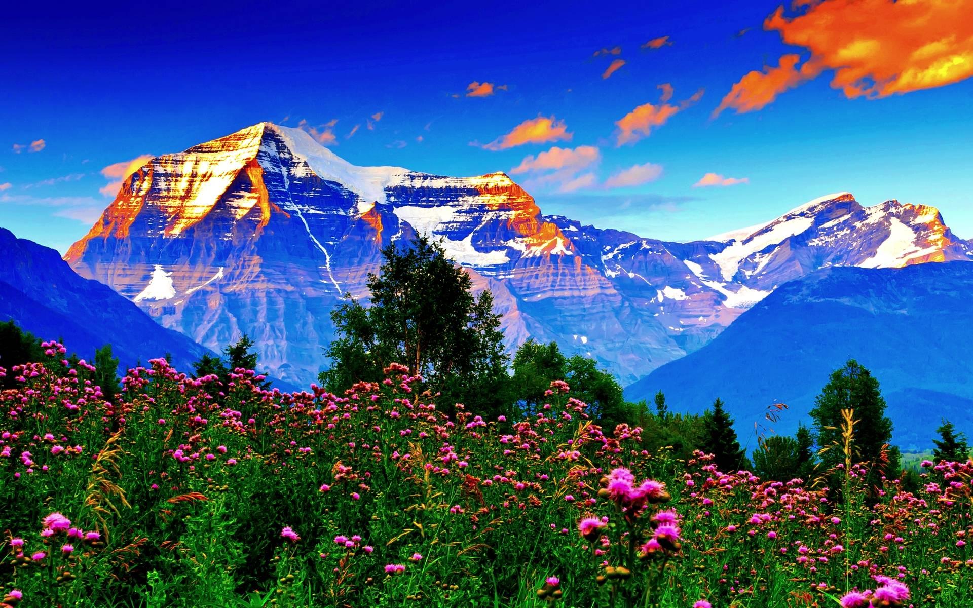 Spring Mountain Landscape HD desktop wallpaper Widescreen High