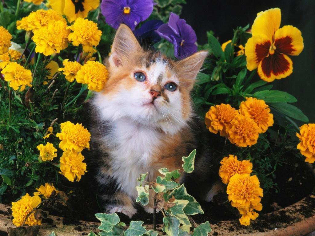 Free wallpapers Free cute kitten wallpapers