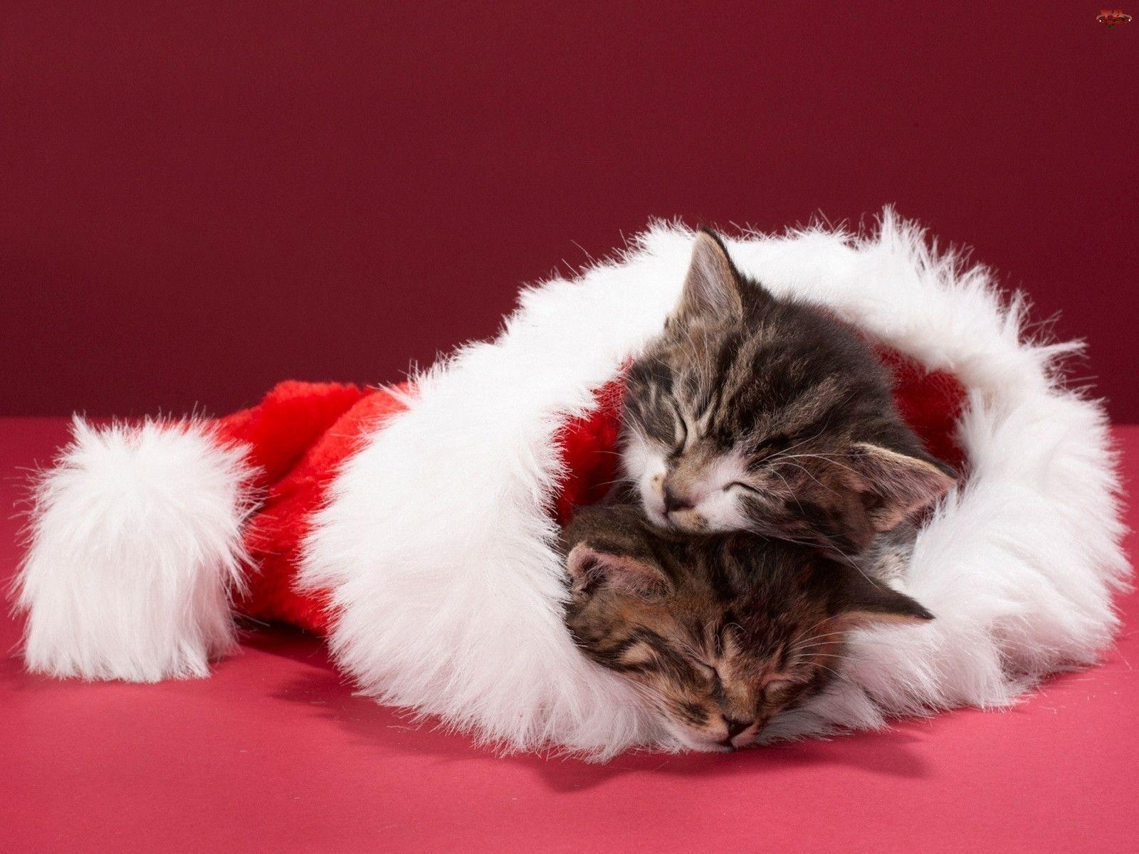 Christmas Kittens. - Cats Wallpaper (36711904) - Fanpop