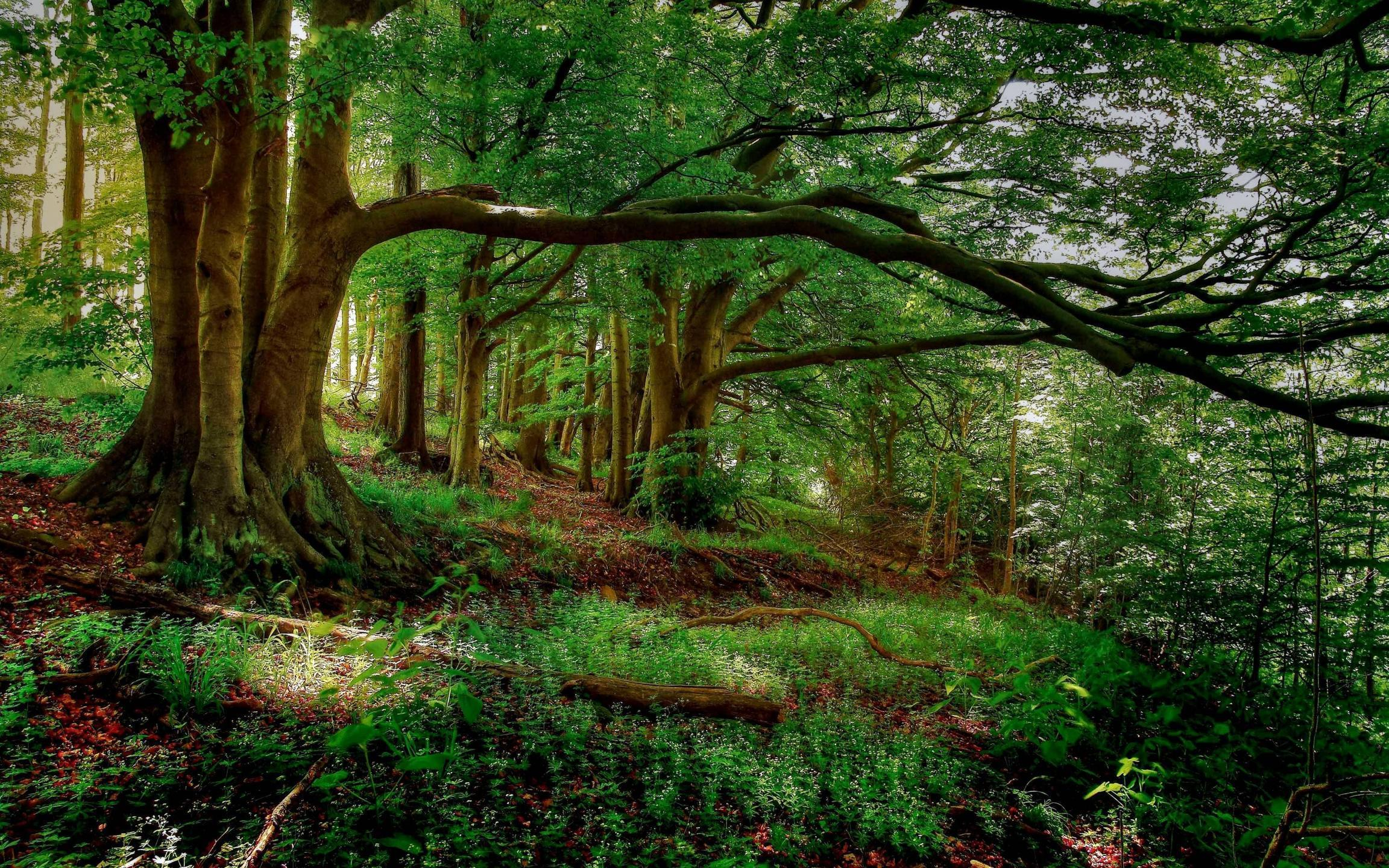 1178 Forest Wallpapers Forest Backgrounds