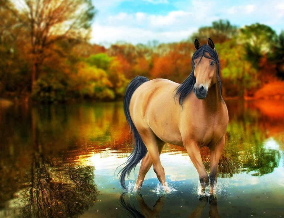 free horse screensavers and wallpapers wallpaper cave