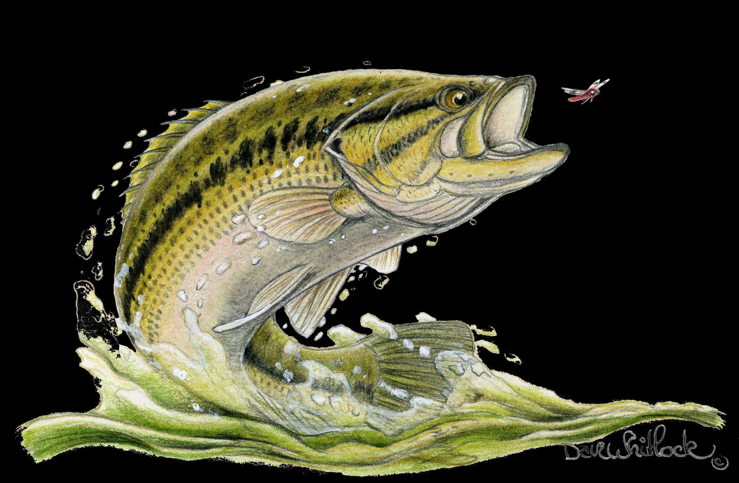 Bass Fishing Wallpaper Backgrounds - Wallpaper Cave