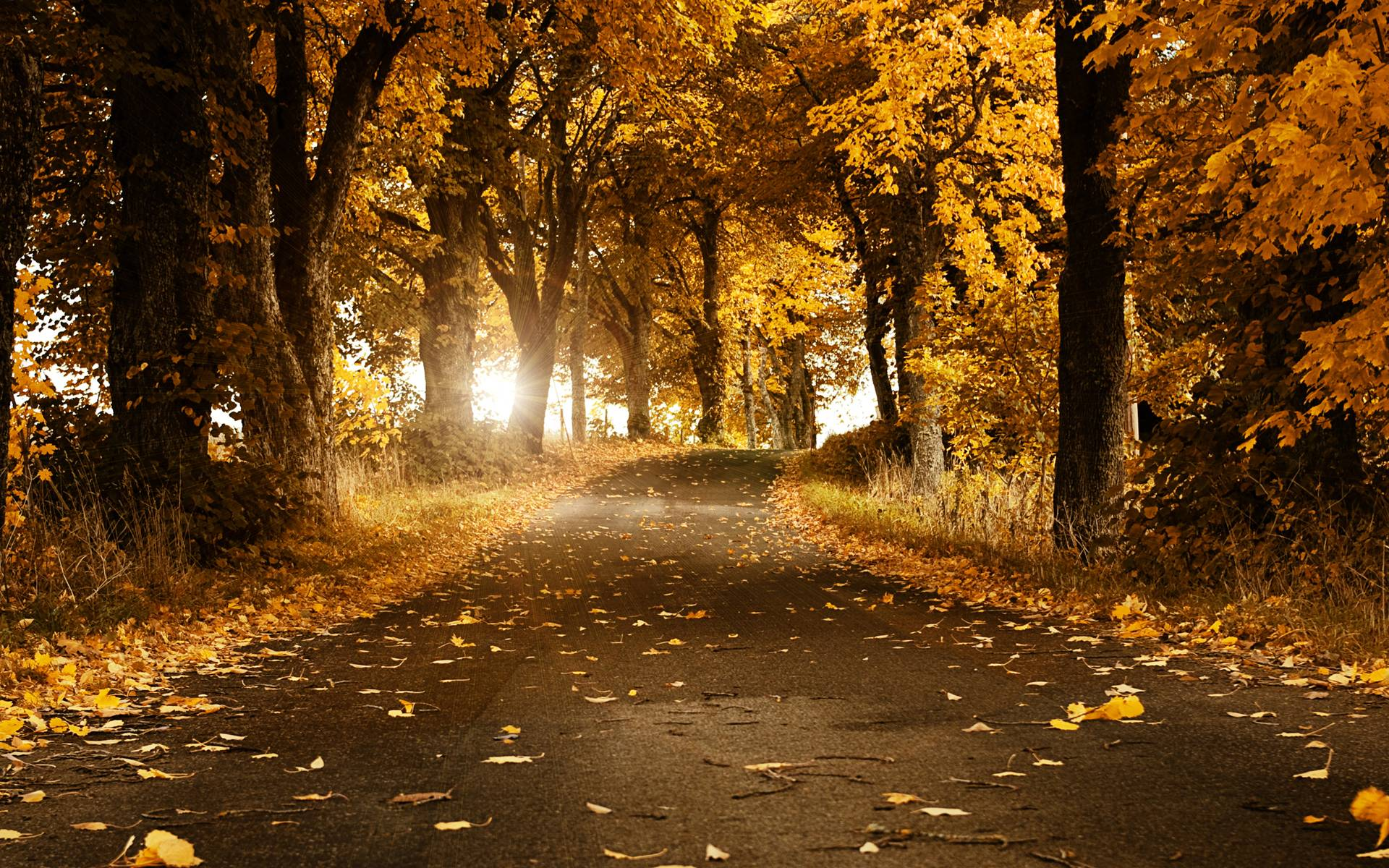 Forest Road Wallpaper | Download Wallpapers