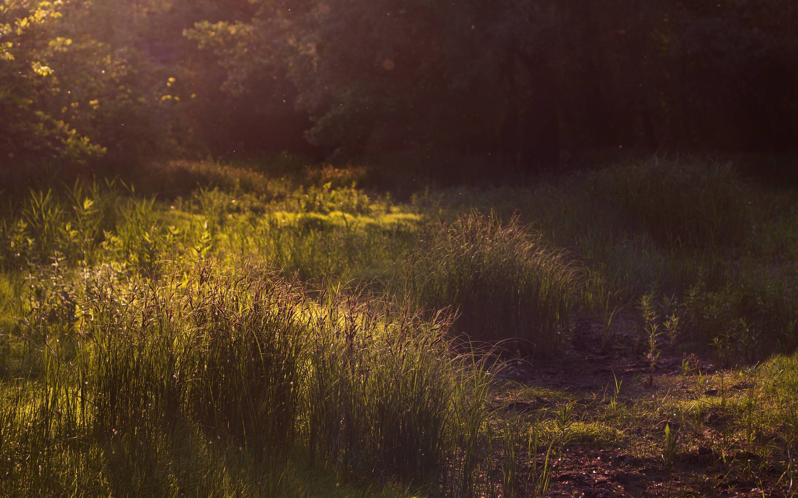 Images For > Summer Fireflies
