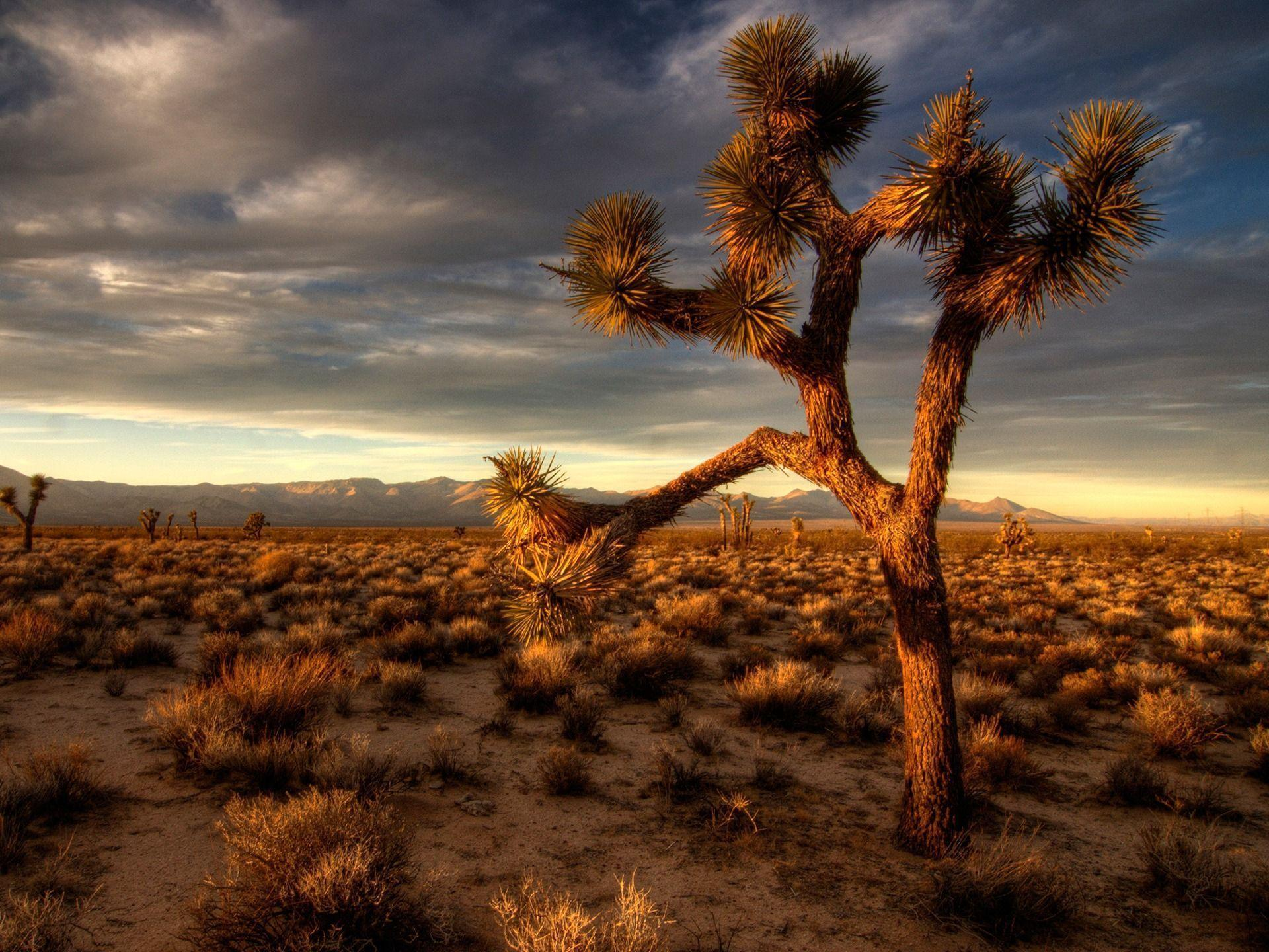 joshua tree wallpapers - wallpaper cave