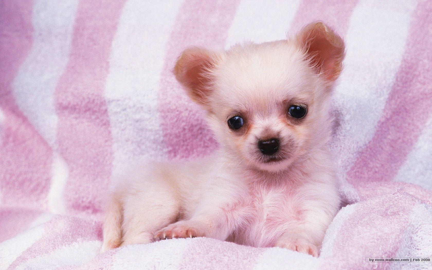 1680*1050 Lovely Puppy wallpapers / Lovely Puppies Photos ...