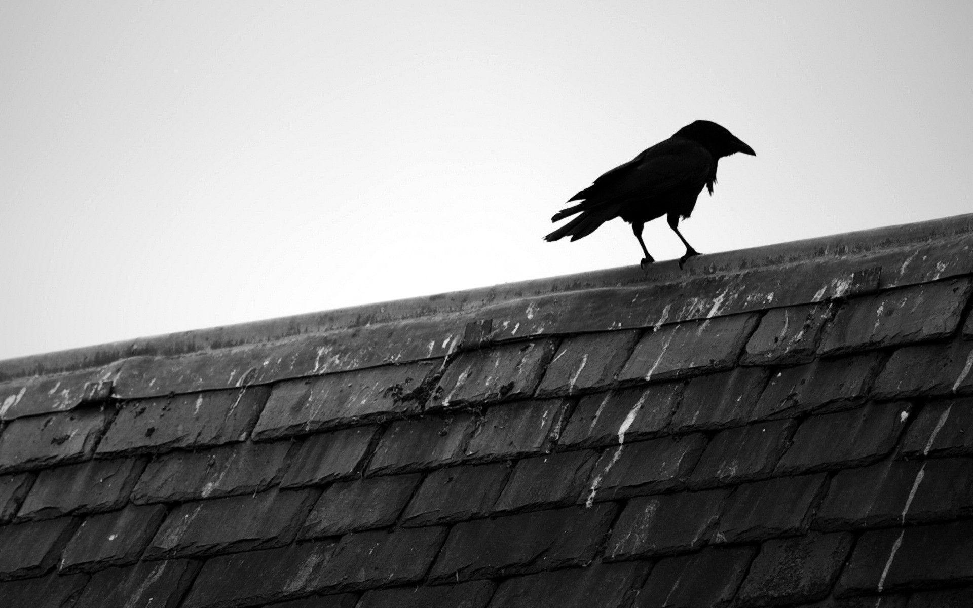 crow wallpapers wallpaper cave