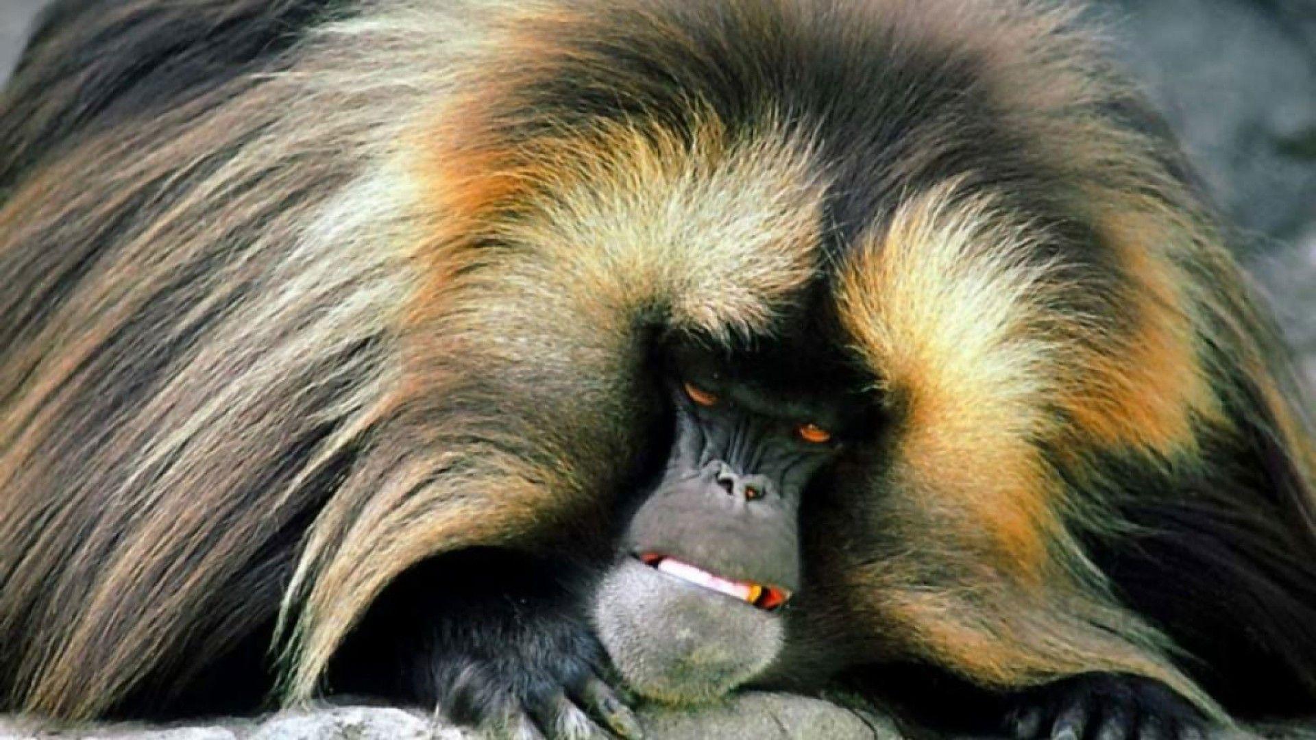 Monkey 2865 - Monkey Wallpaper