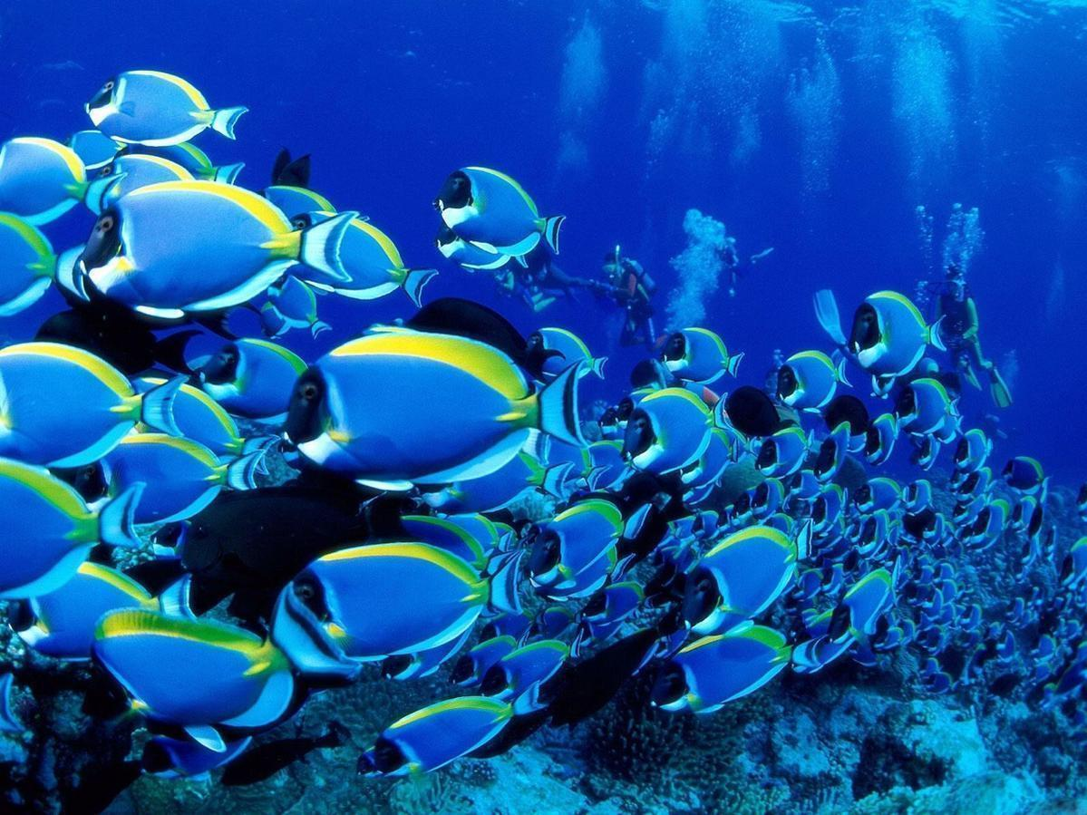 Tropical Fish Wallpapers 26414 Hd Wallpapers in Animals