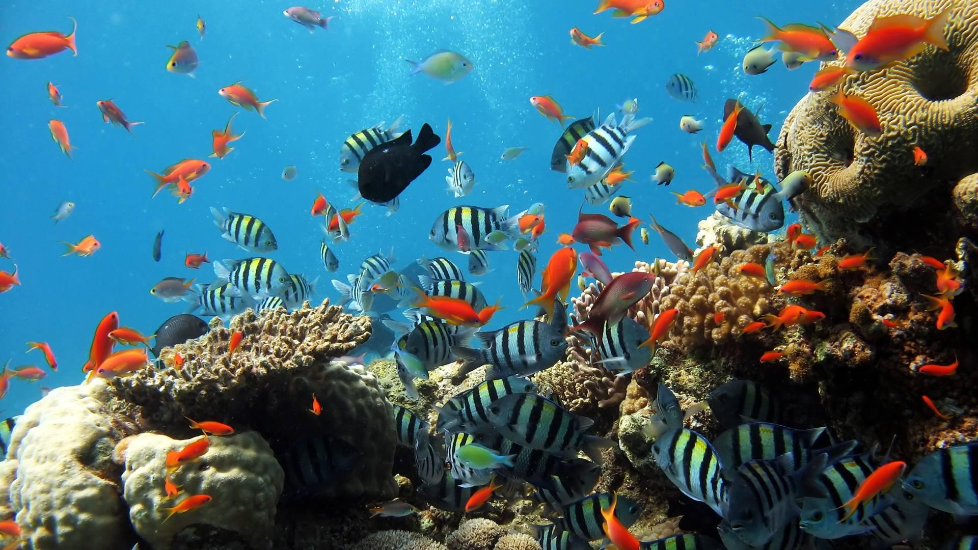 Hd wallpaper underwater - Wallpapers For Hd Wallpaper Widescreen Underwater