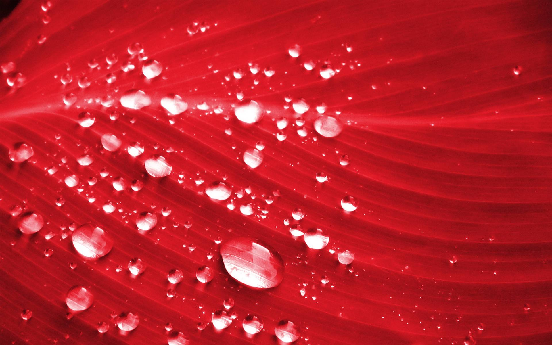 Image result for red color hd images