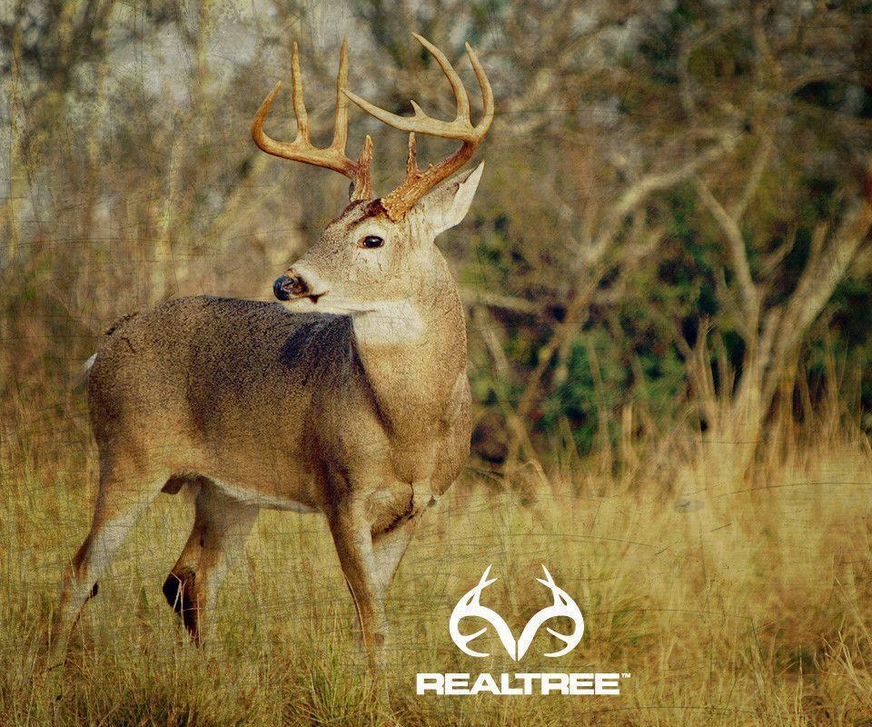 Deer Hunting Wallpapers