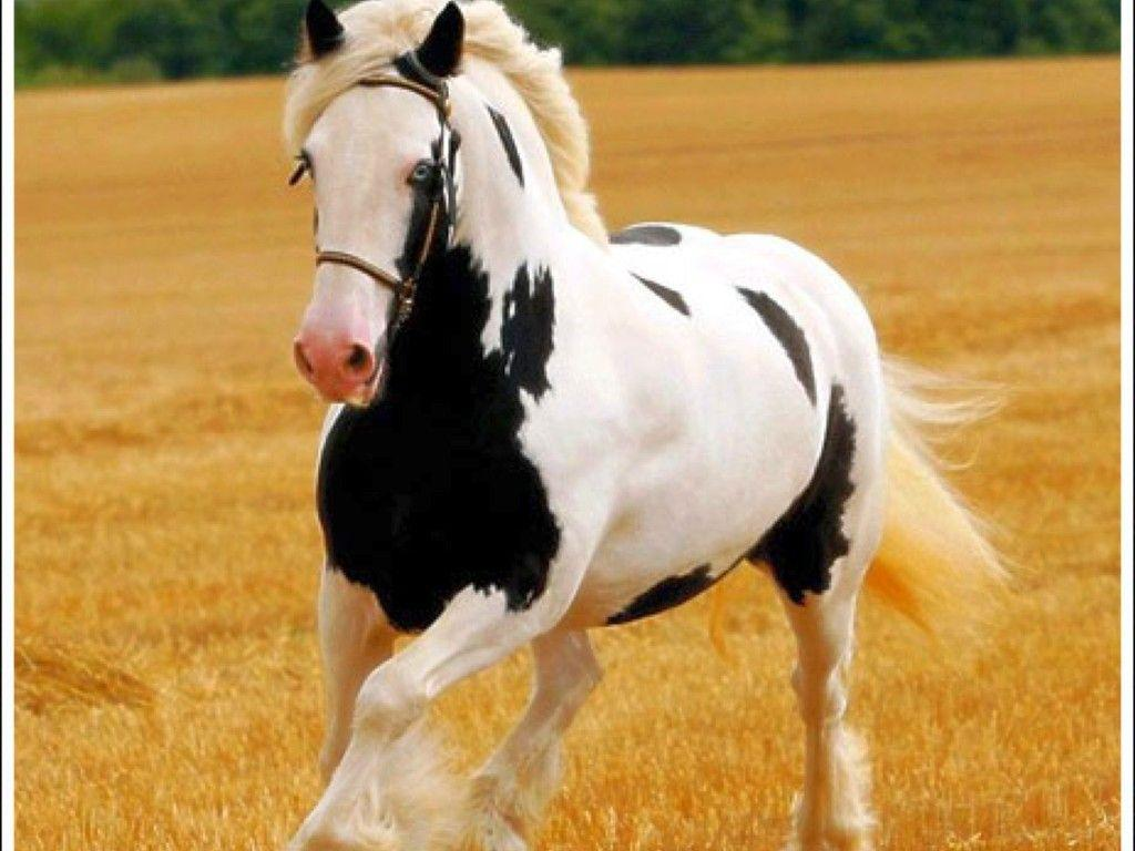 free horse screensavers and - photo #21