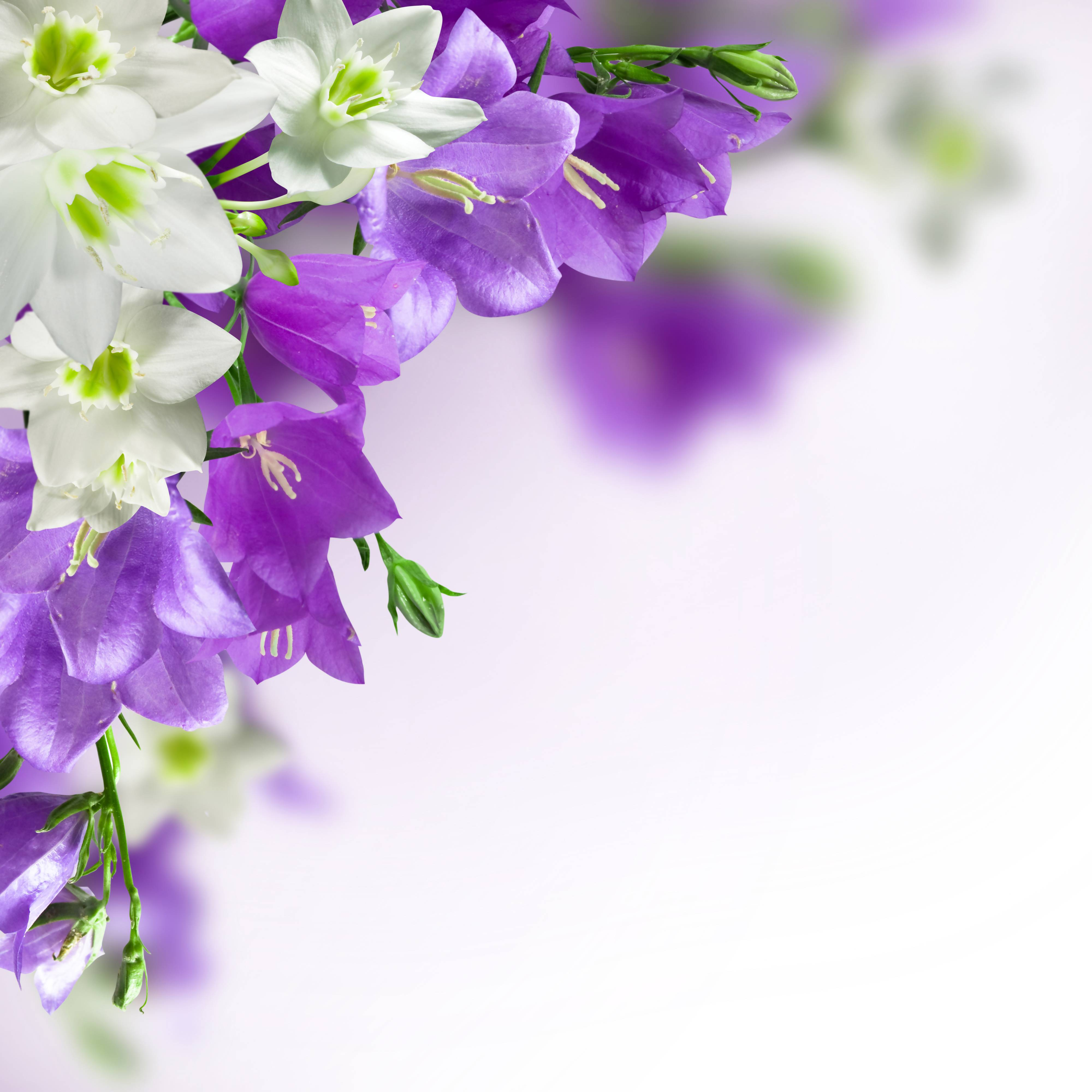Wallpaper With Flowers Free Download