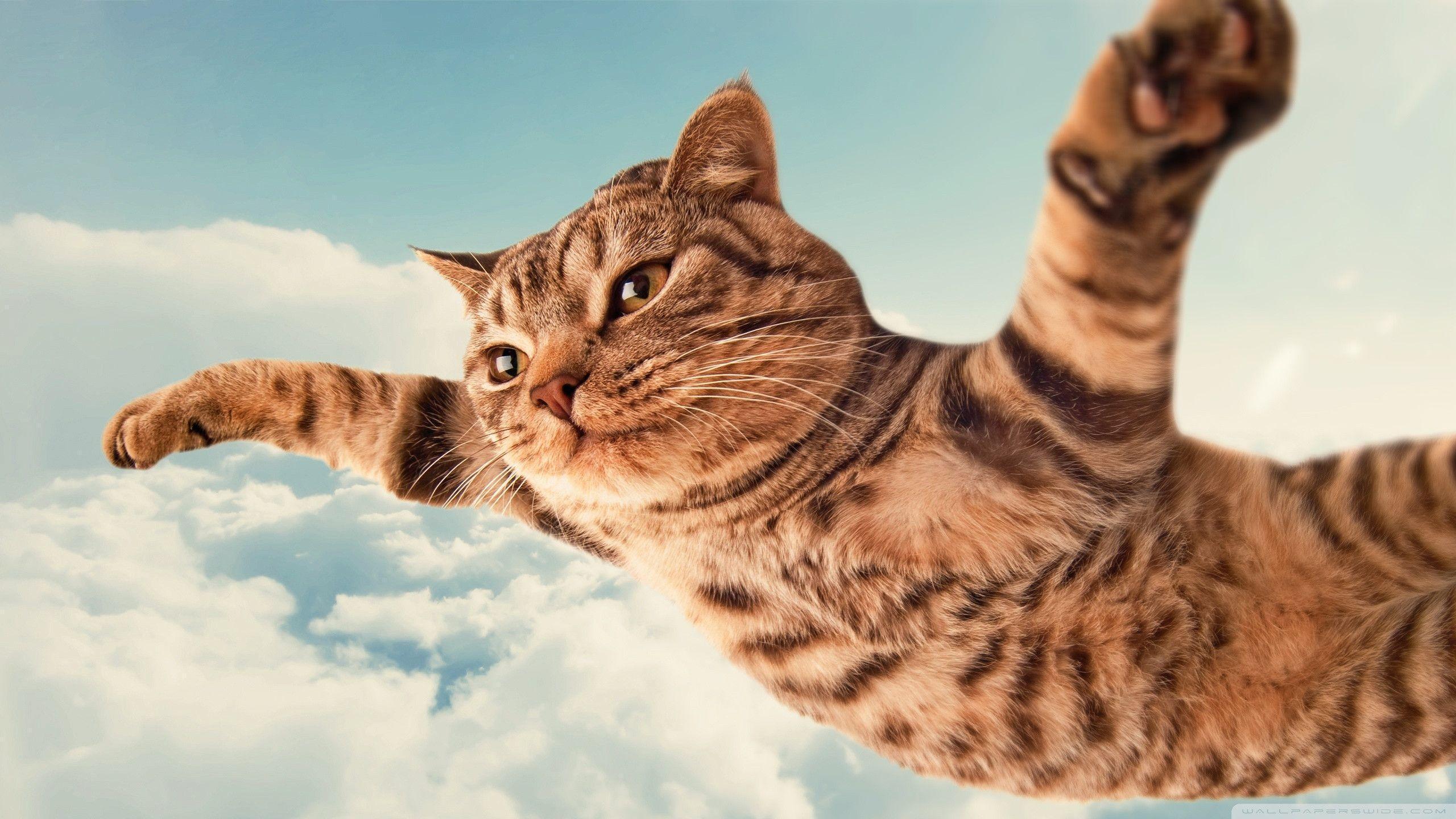 Funny Cat Desktop Wallpapers Wallpaper Cave