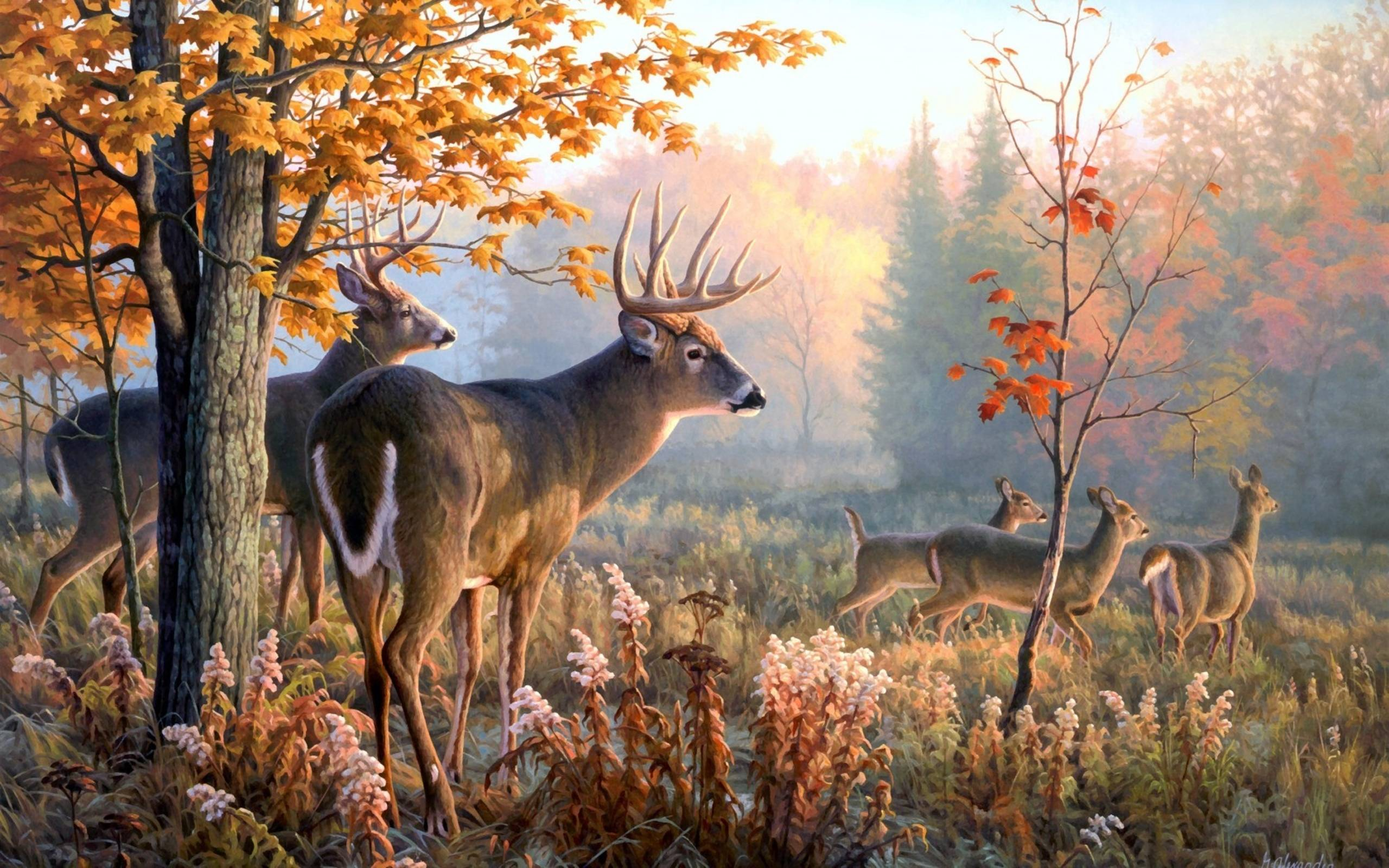 Deer desktop wallpapers wallpaper cave for Deer wall mural