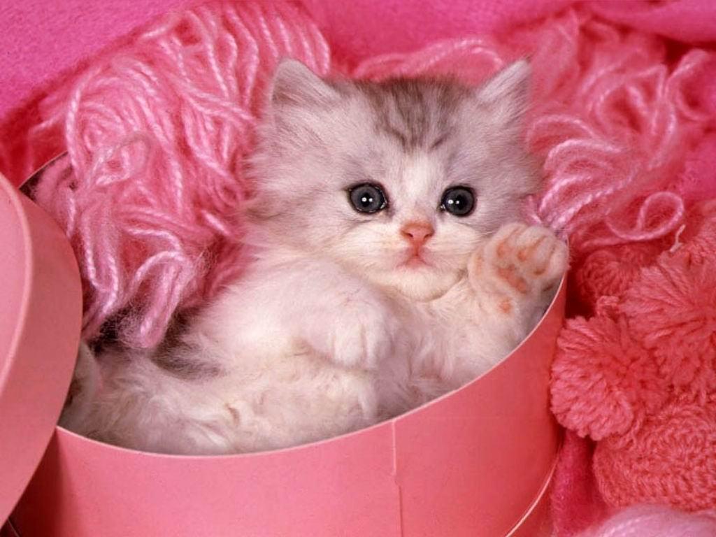 Cute Love Free Download Download Hd Love Cute Wallpaper Sweet ...