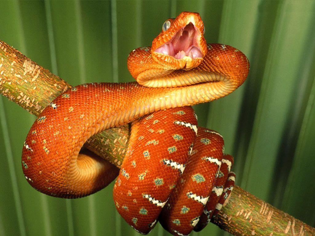 Full HD Snake Wallpapers - HD Wallpapers Inn
