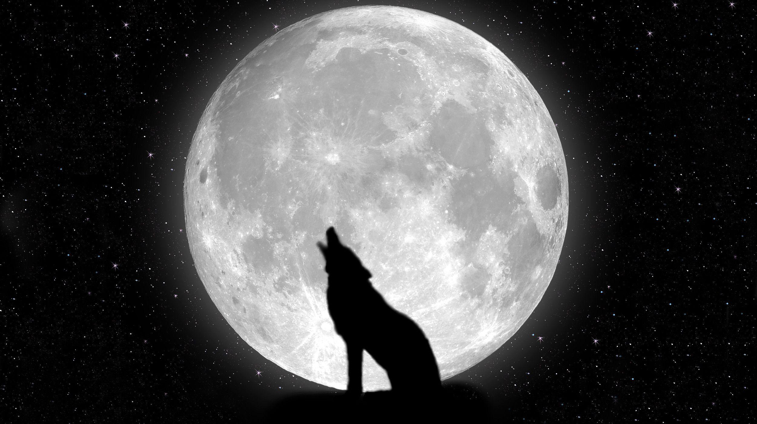 black wolf howling wallpaper - photo #17