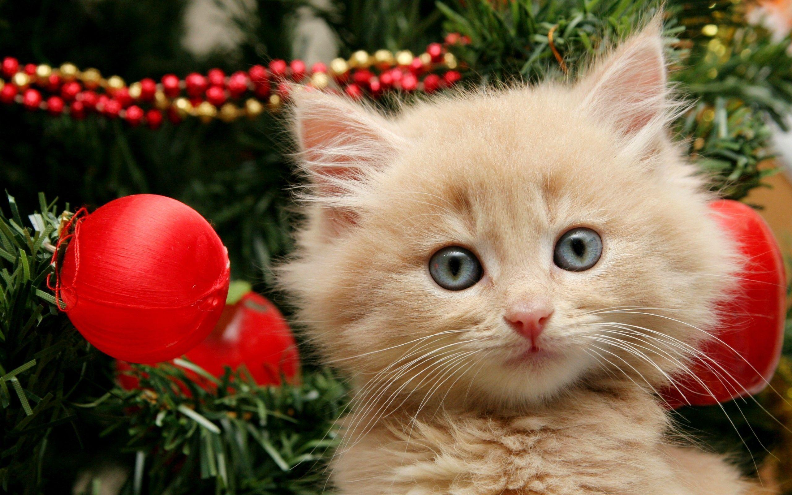 Merry Christmas kitten wallpaper | 2560x1600 | 2829 | WallpaperUP