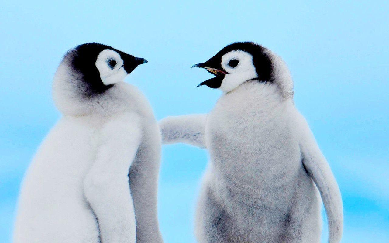 Cute penguin - photo#13