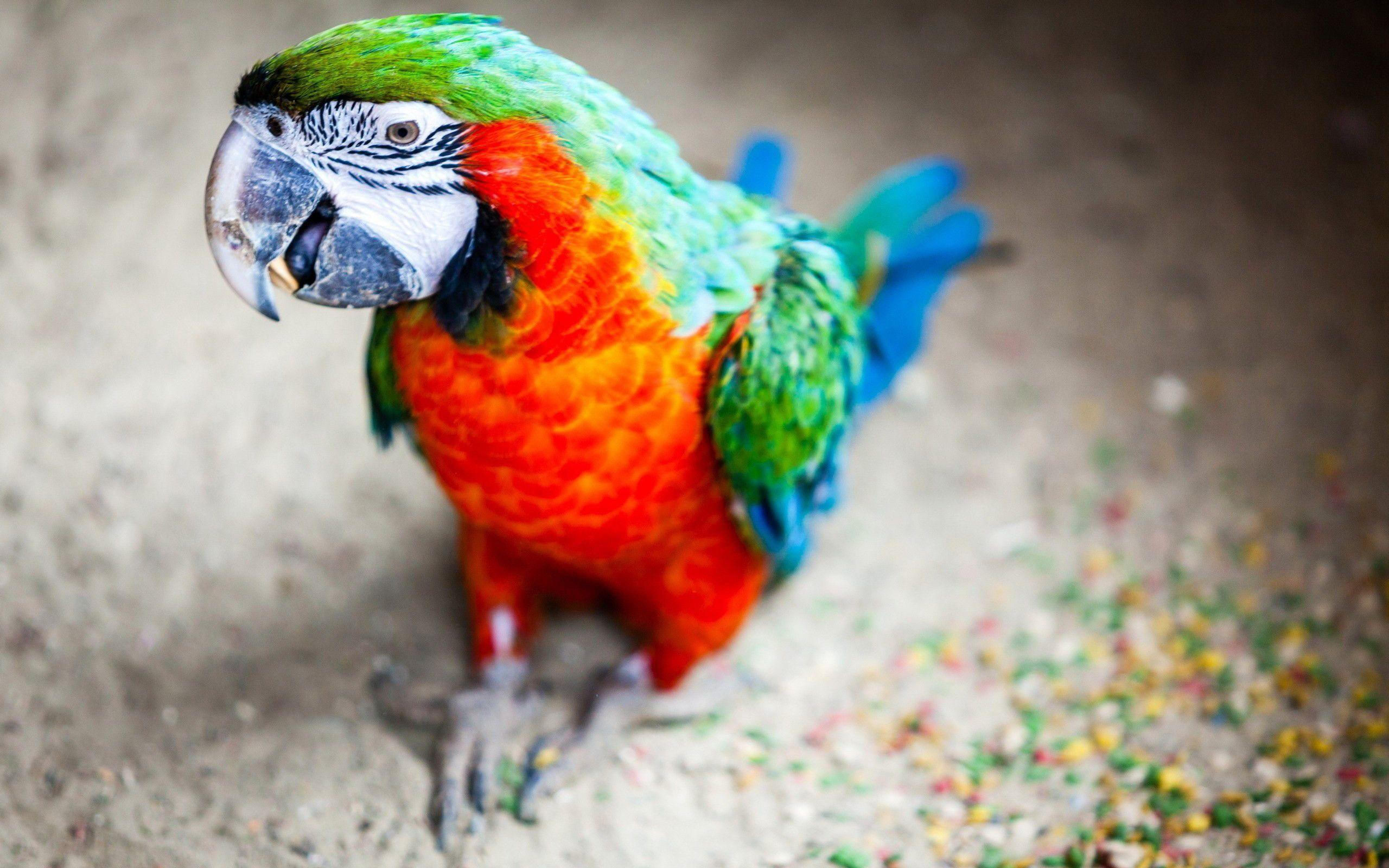Macaw Parrot Wallpaper | HD Wallpapers