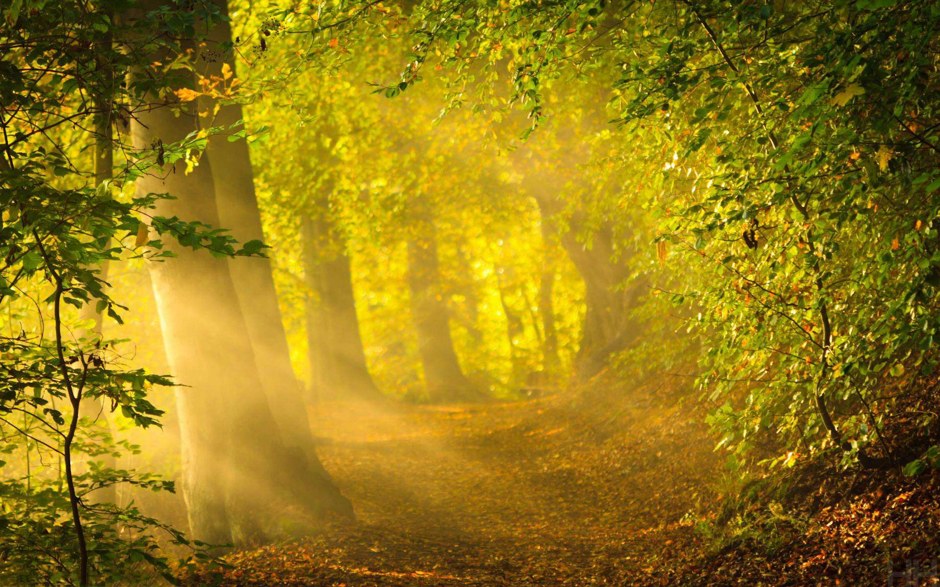 Animals For > Dark Enchanted Forest Backgrounds