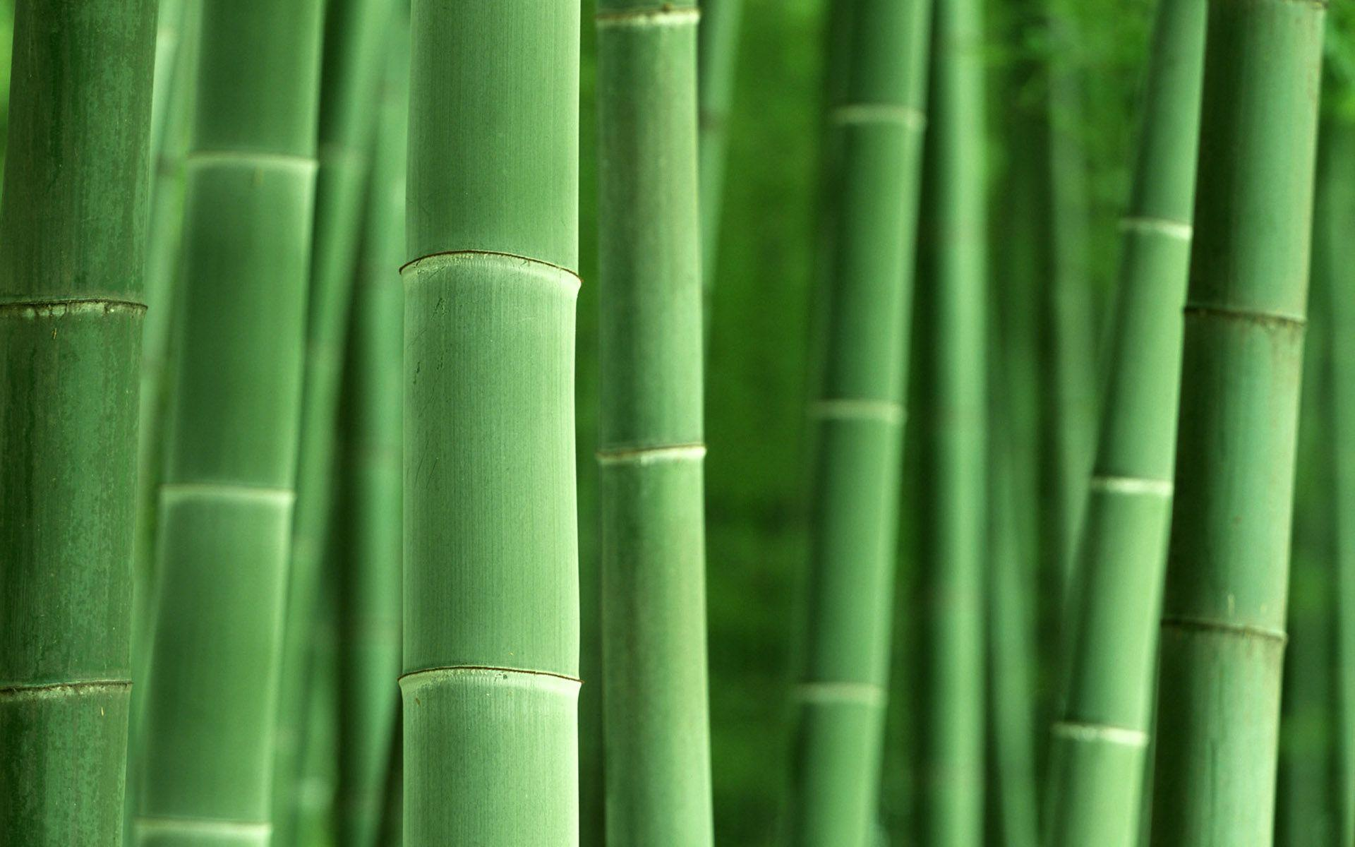 Bamboo Desktop Wallpapers Wallpaper Cave
