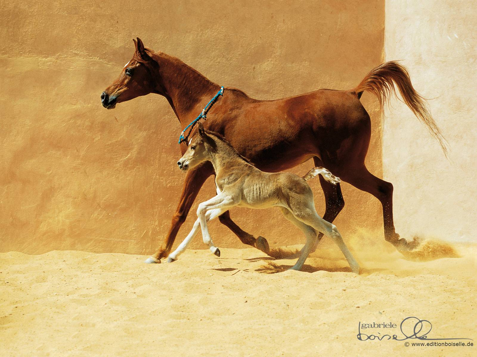 Cute horse wallpapers wallpaper cave arabian horse hd wallpapers horse desktop wallpapers cool thecheapjerseys Choice Image