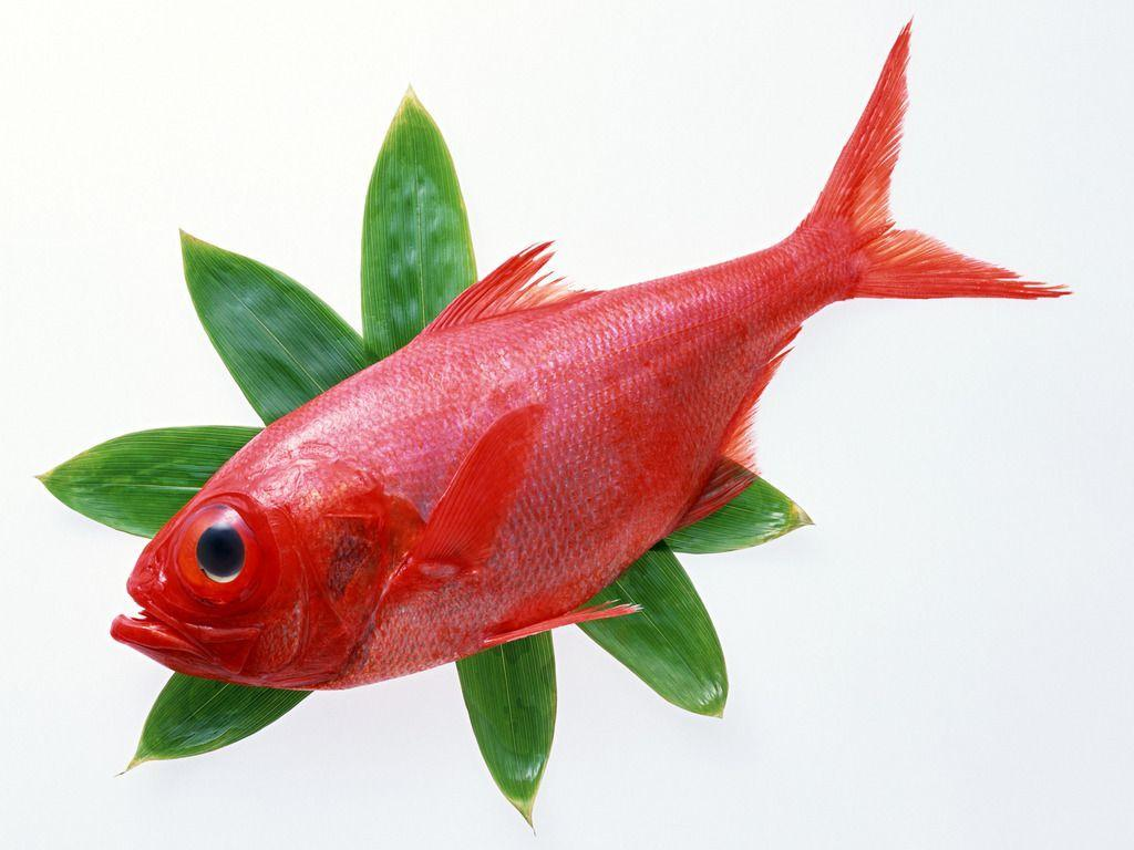 Image For > Redfish Clipart
