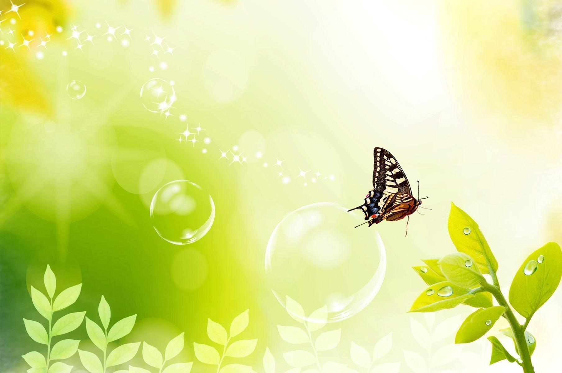 butterfly background - photo #44