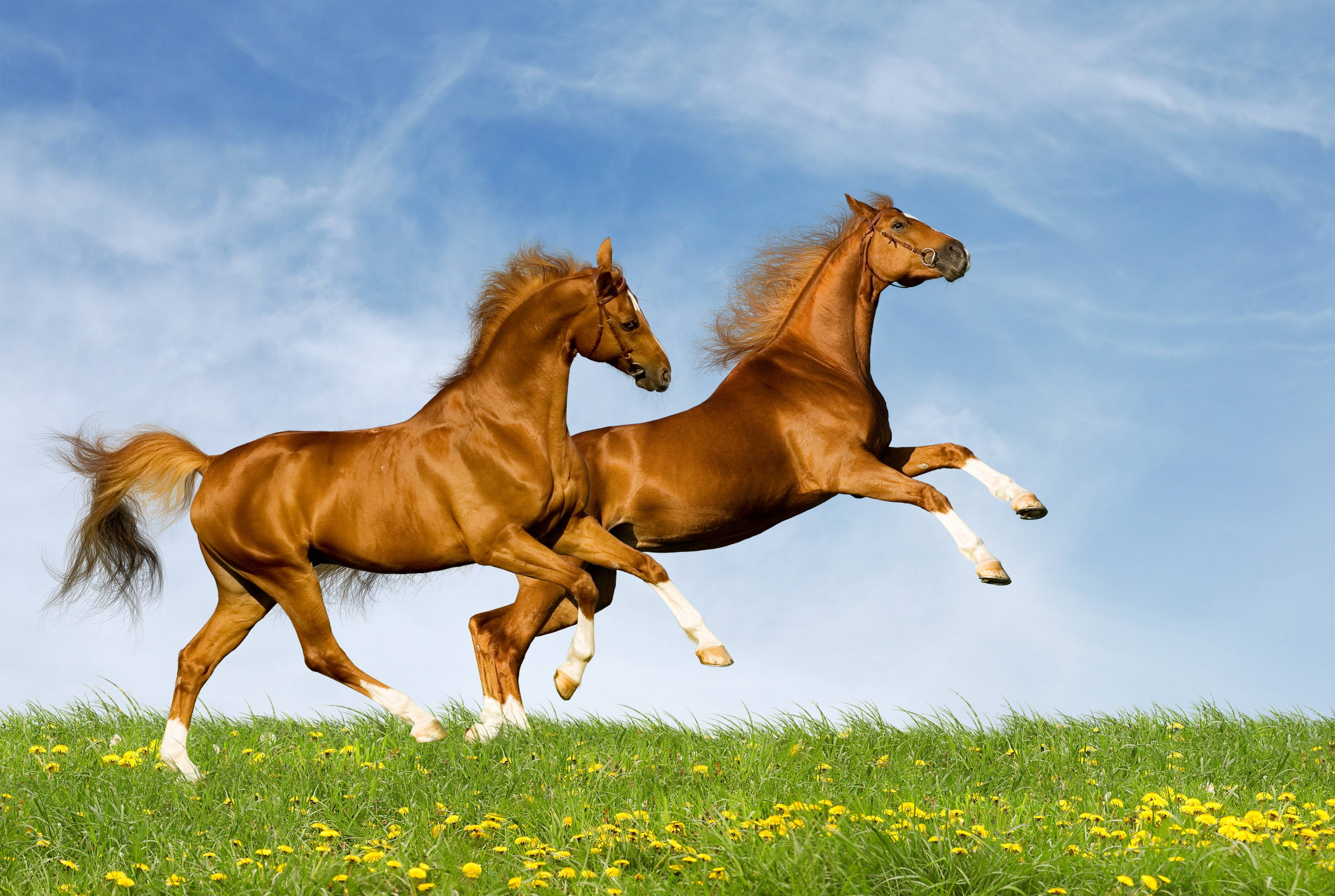 horses desktop wallpapers free desk wallpapers