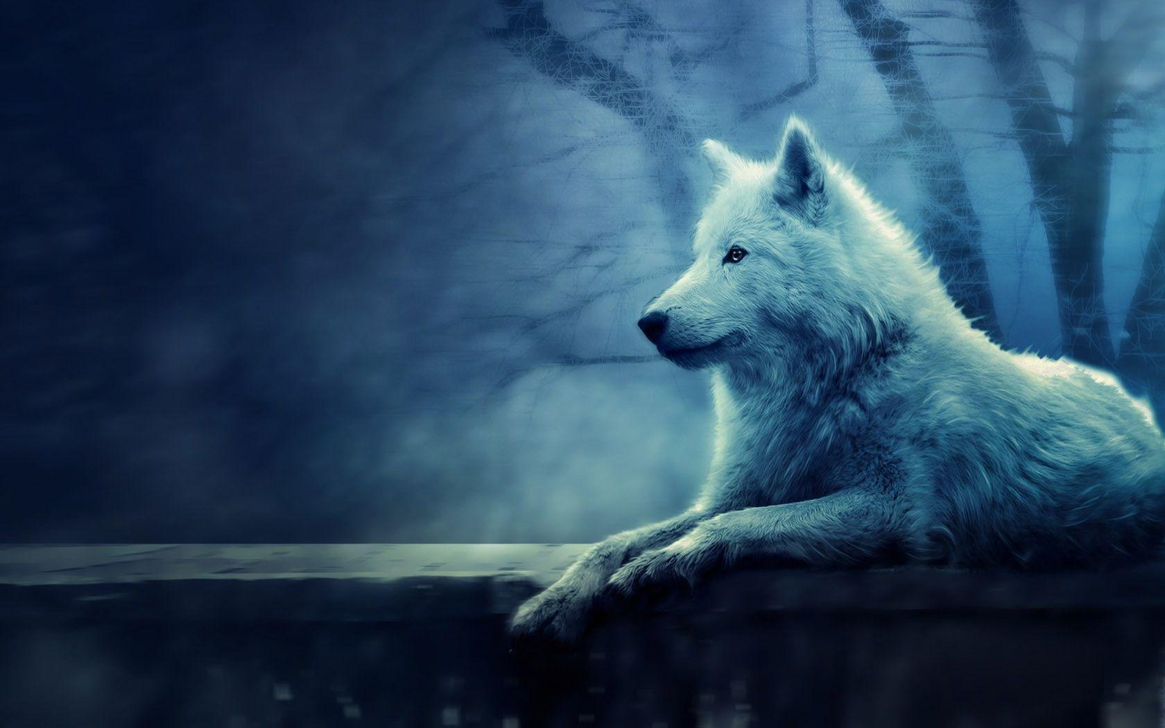 Wallpapers For > Blue Wolf Wallpapers