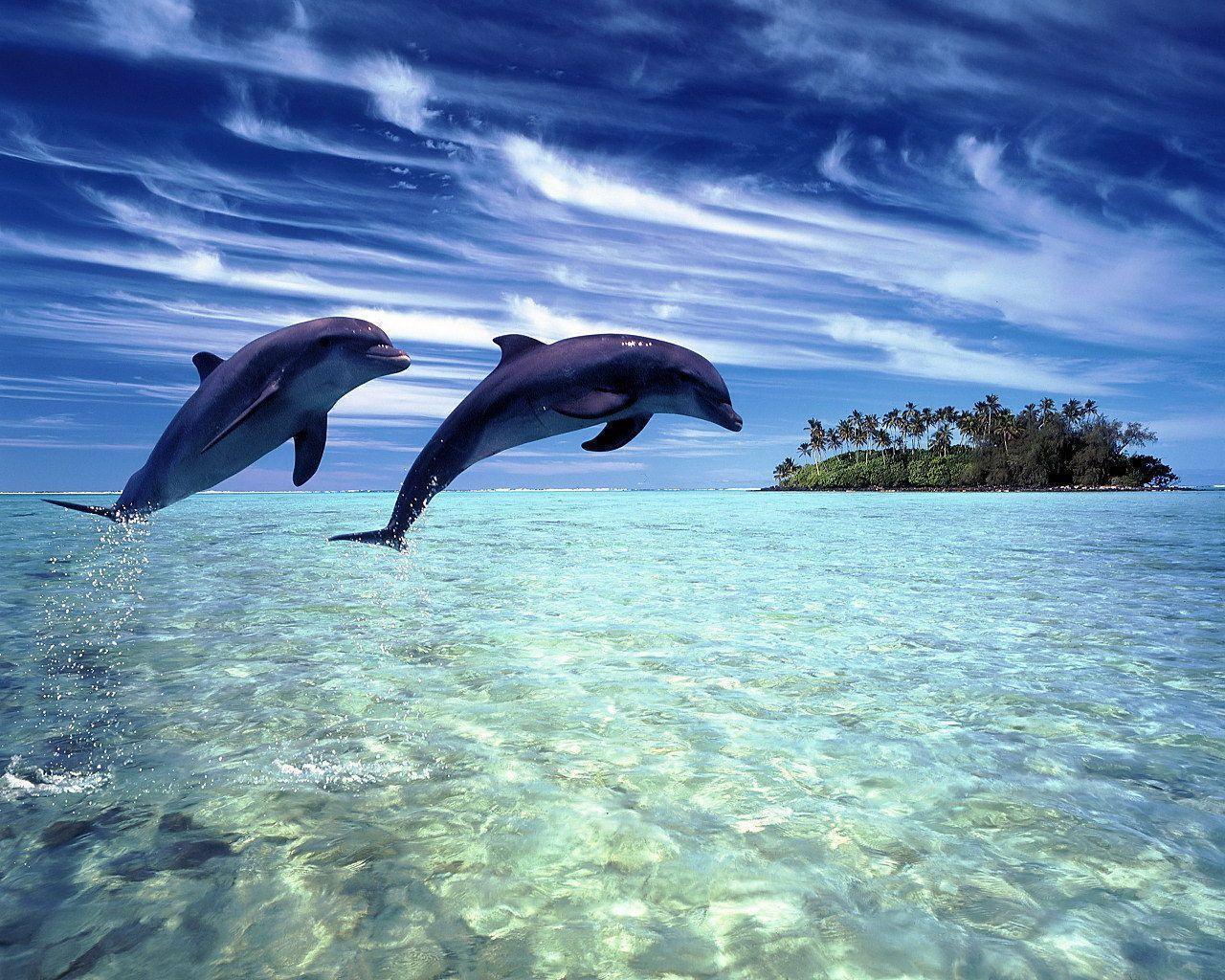 Dolphin Wallpapers | Sky HD Wallpaper