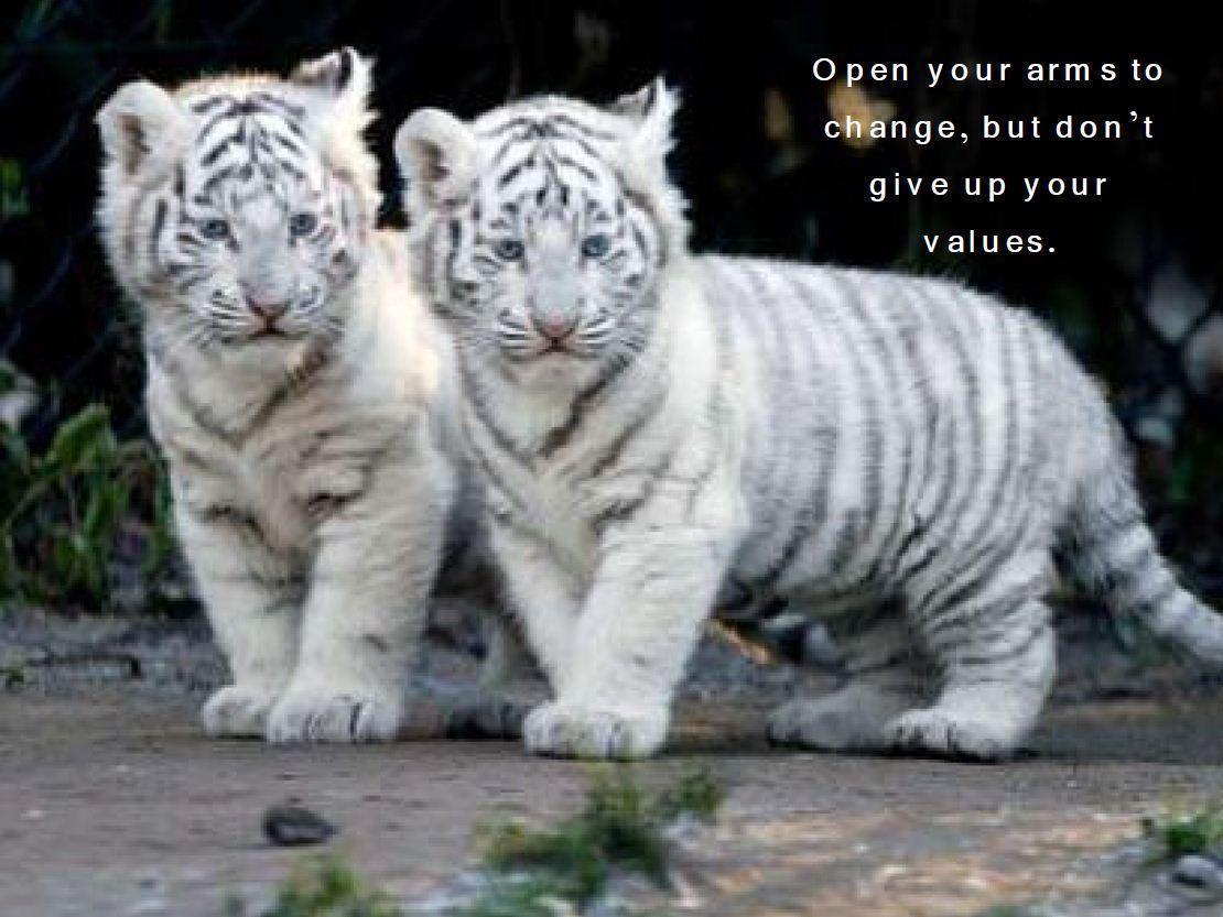 male tiger cub names