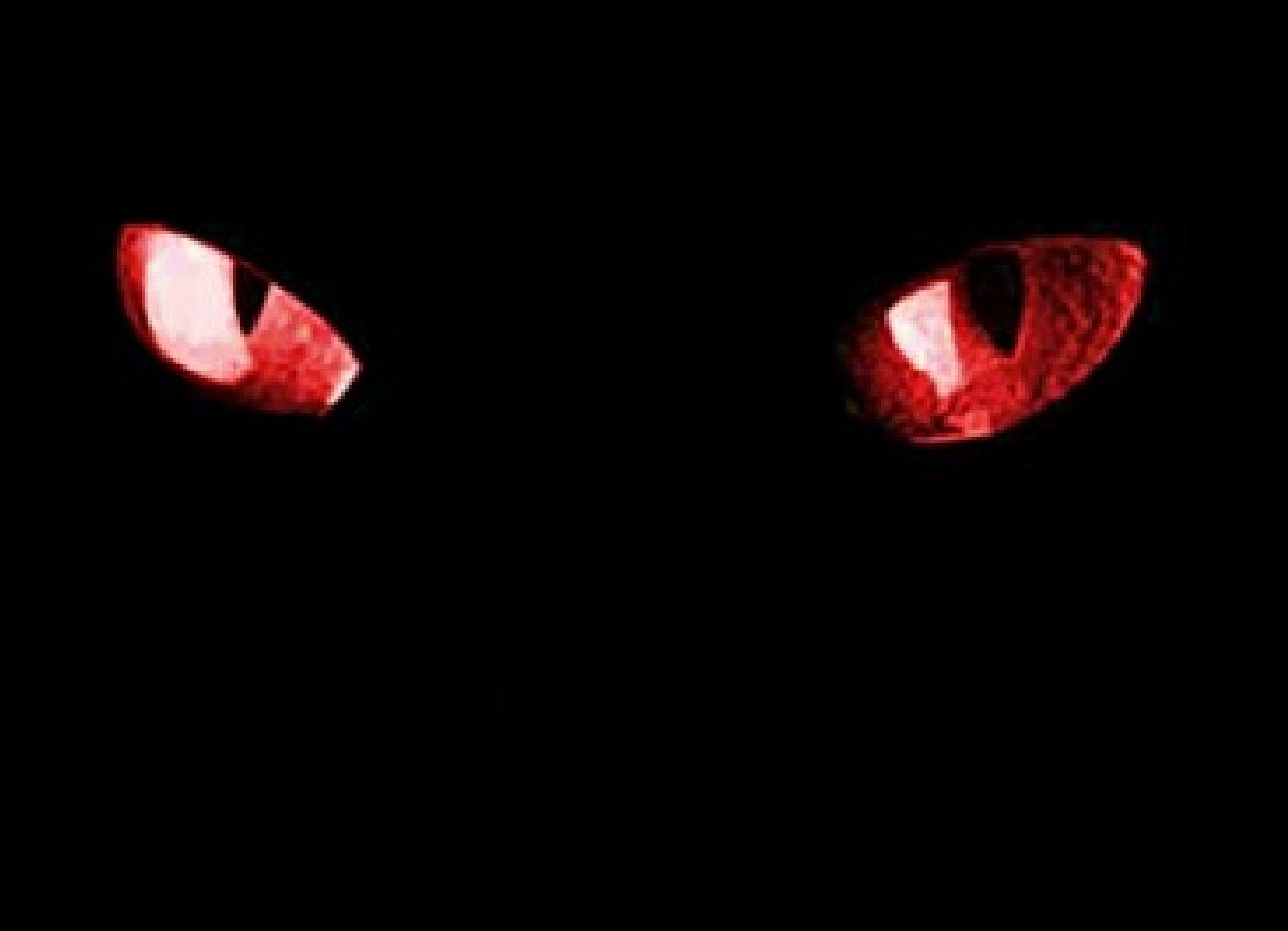 Demon Cat With Red Eyes