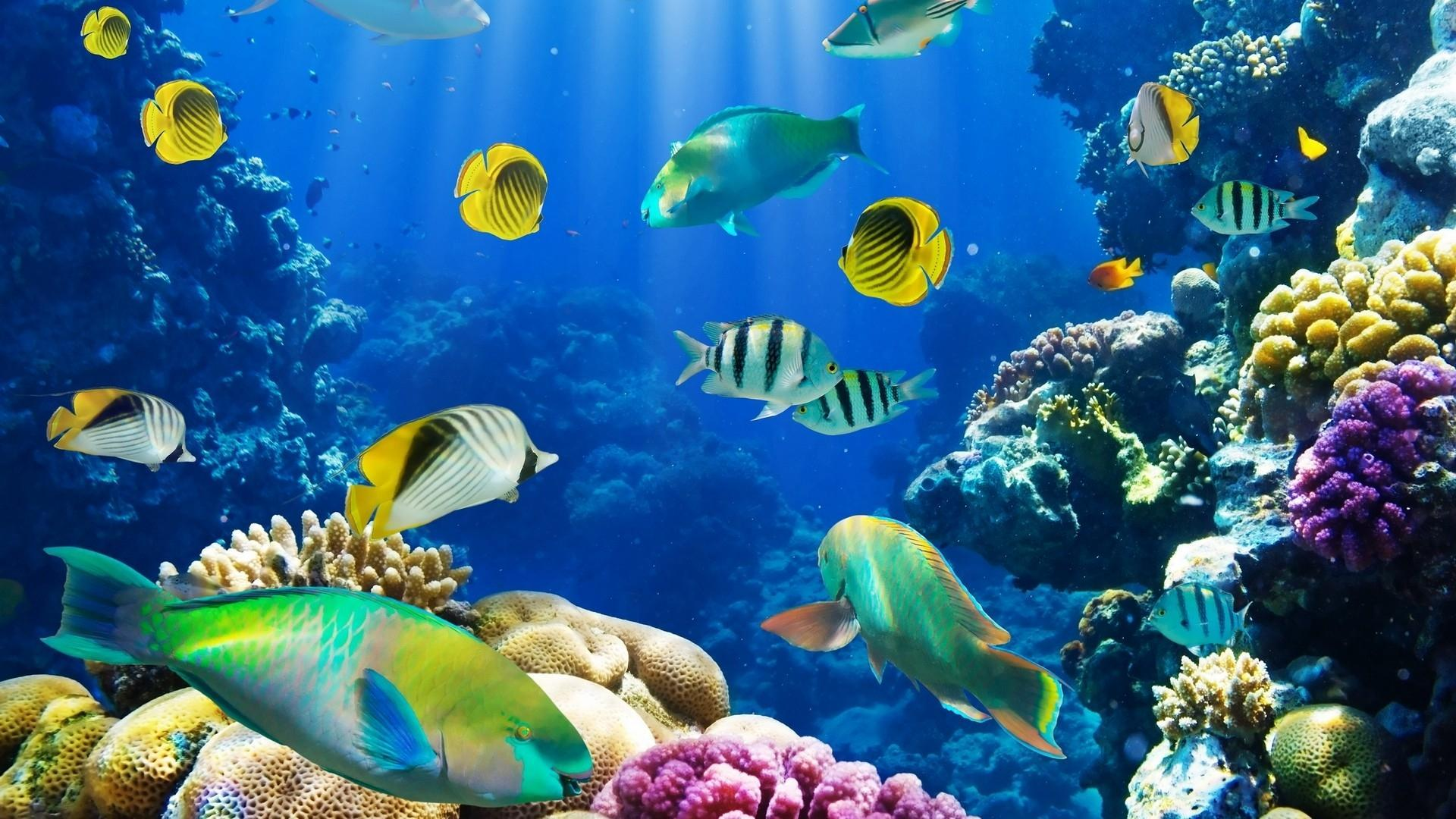 Wallpaper download on life - Hd Black White Animals Fish Sealife Hd Resolution Wallpaper