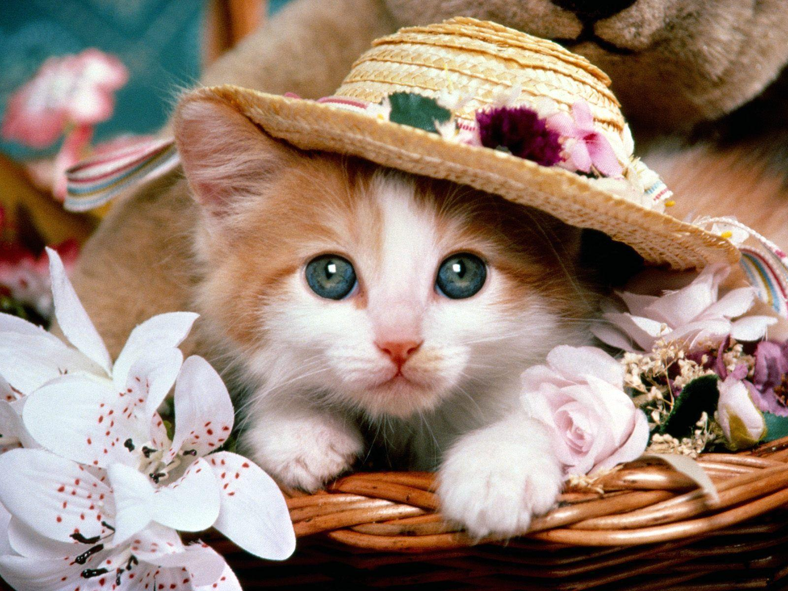 Pix For > Funny Cats And Kittens Wallpapers