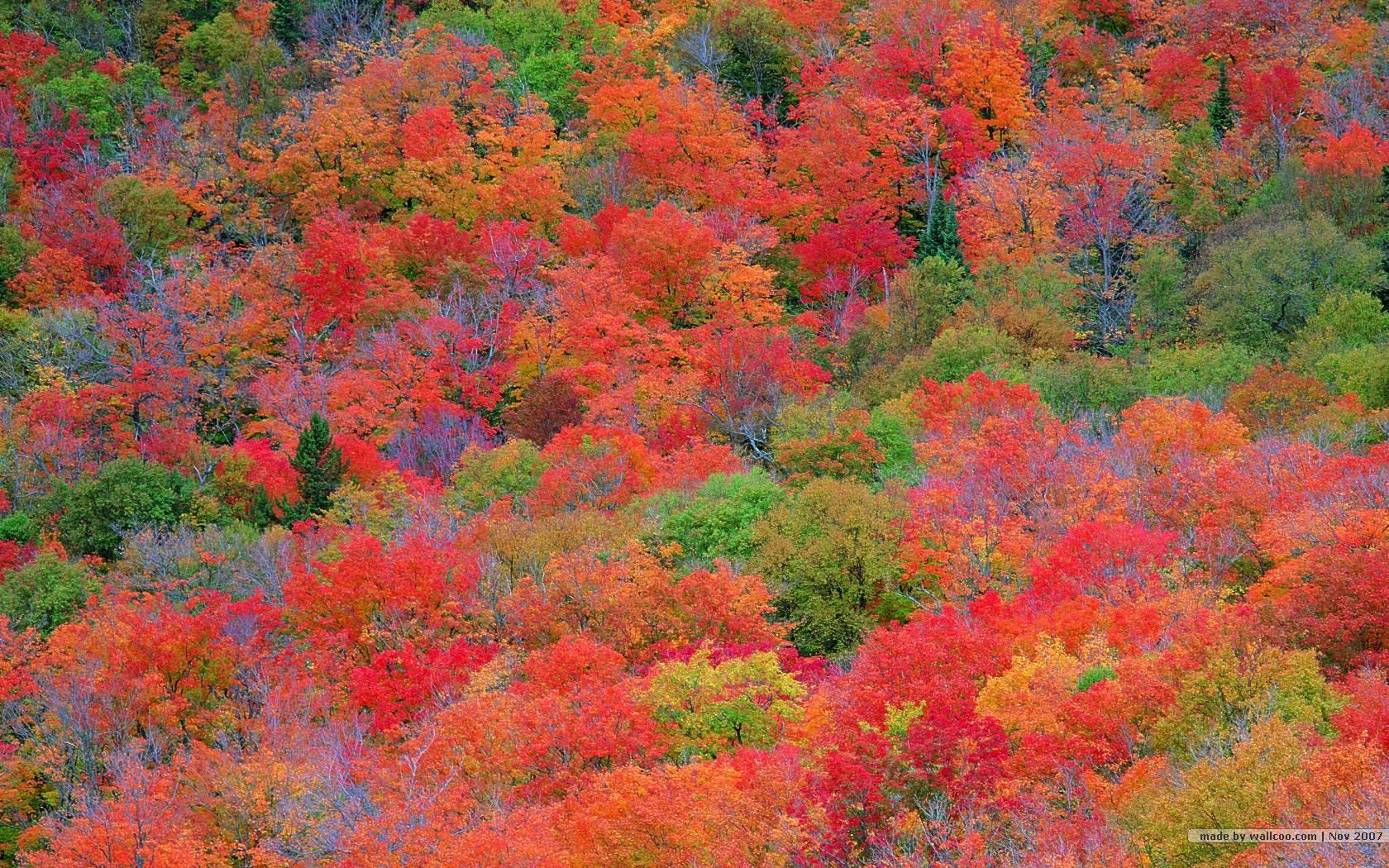Fall Leaves Wallpapers Desktop - Wallpaper Cave