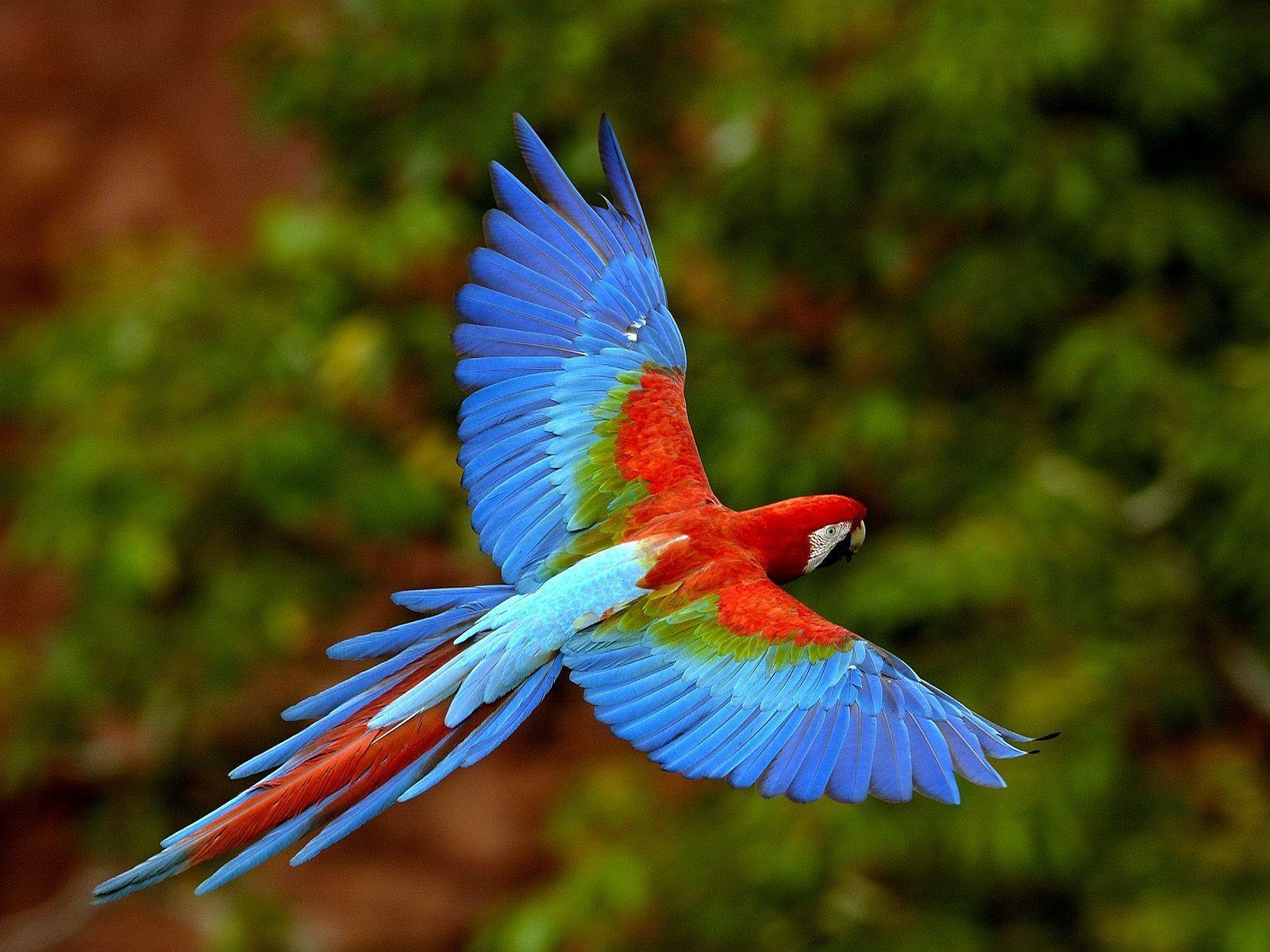 Macaw Wallpapers | HD Wallpapers Base