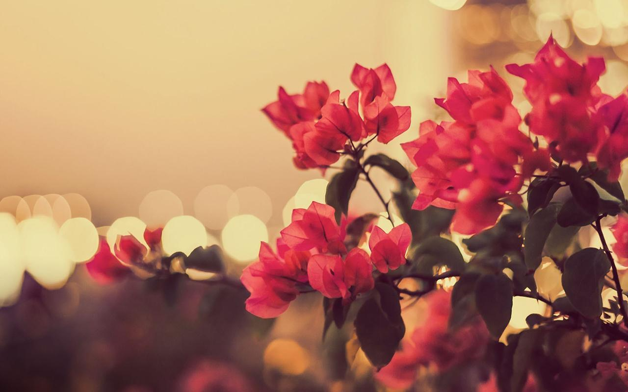 Vintage Flowers Wallpapers , Wallpaper Cave