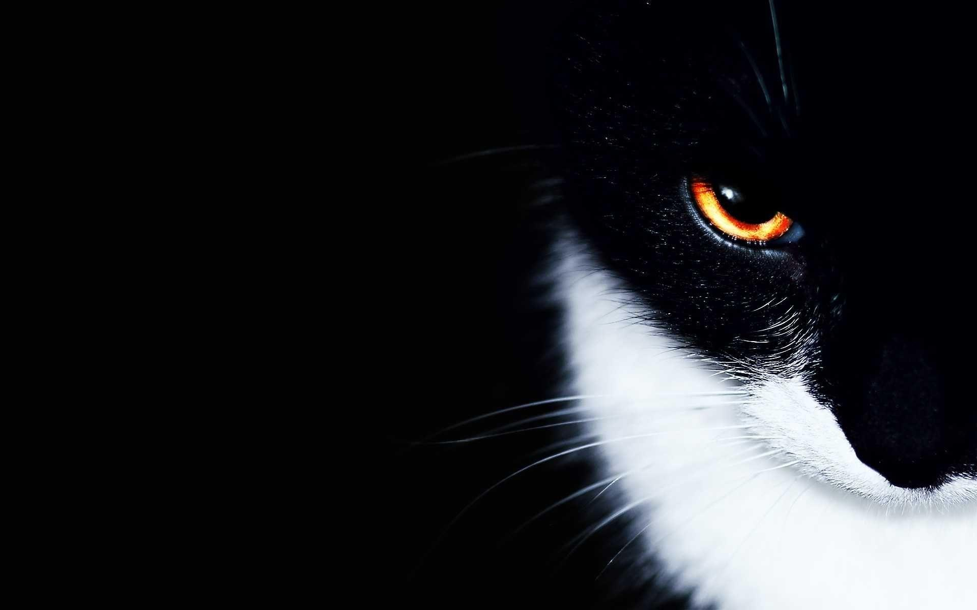 black and white cat wallpapers - wallpaper cave