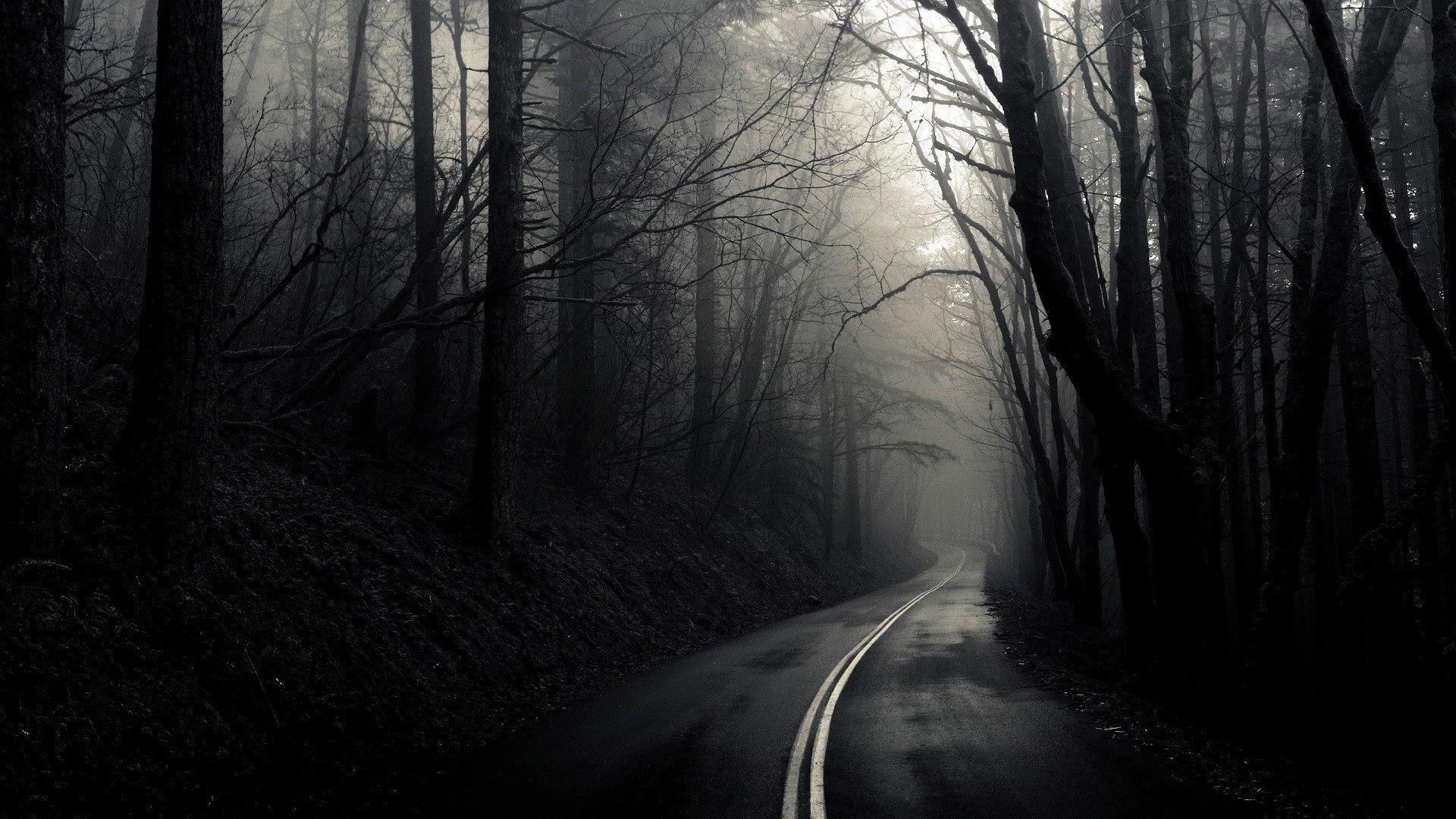 Dark Forest Wallpapers High Resolution Background 1 HD Wallpapers ...