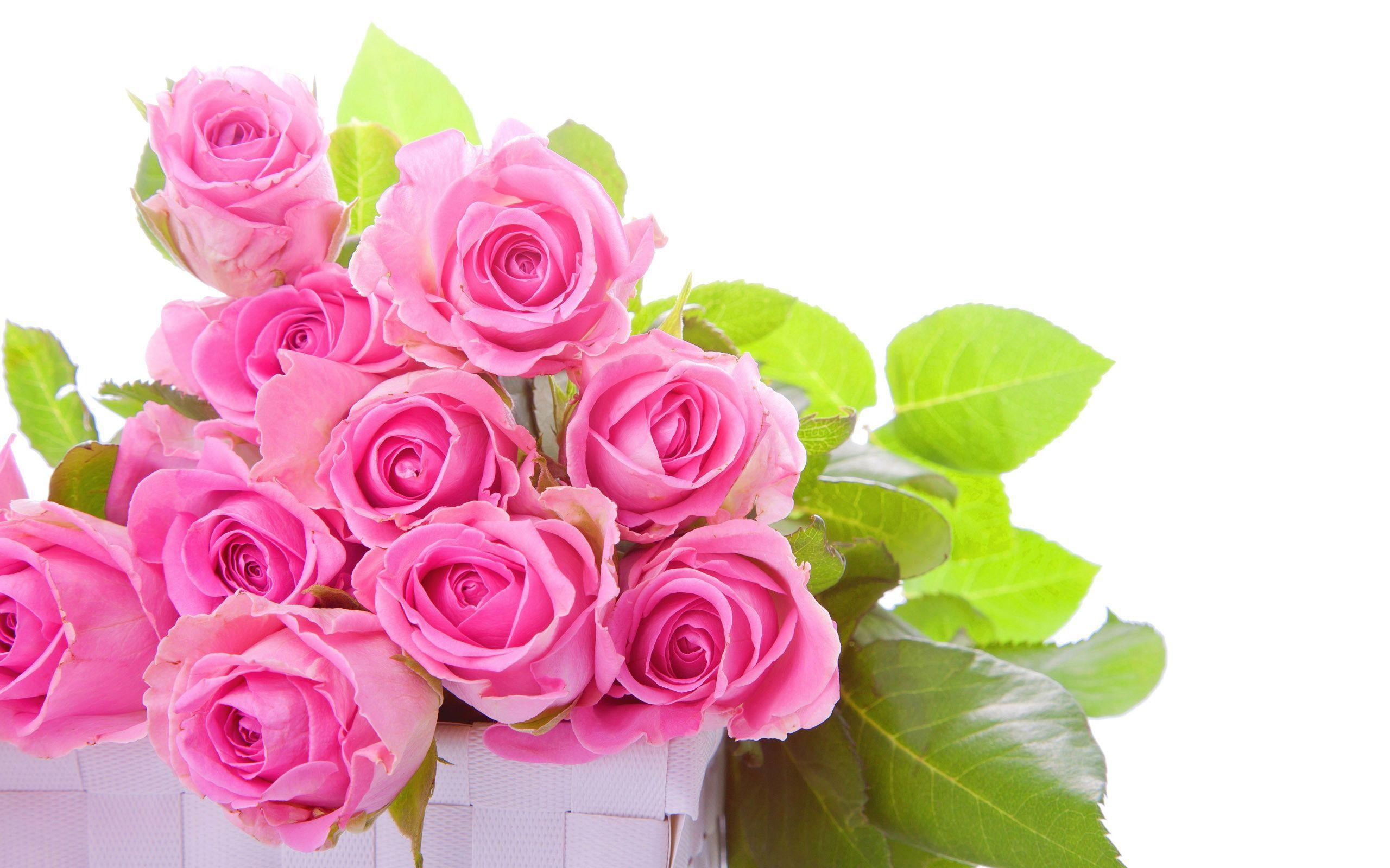 Pink roses bouquet Wallpapers #