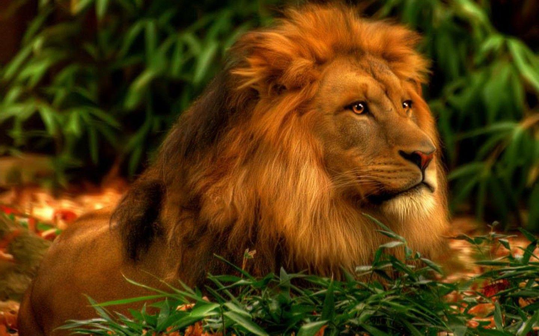 3d lion 1280 - photo #3