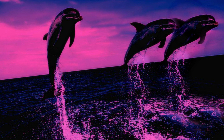 Dolphin Desktop Wallpapers - Wallpaper Cave