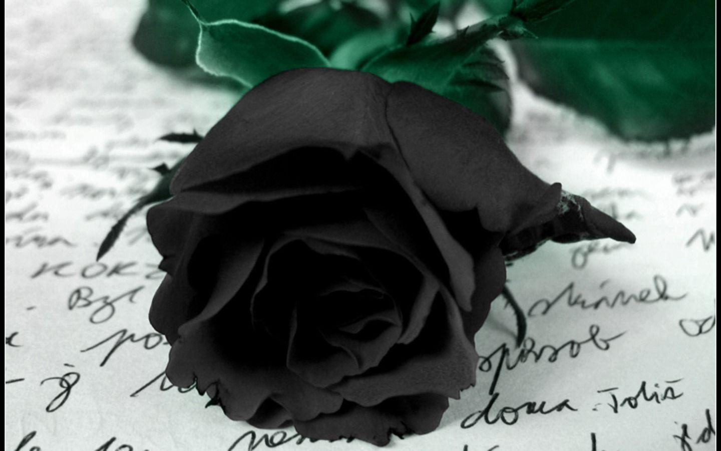 Wallpapers For > Black Rose Wallpapers Hd