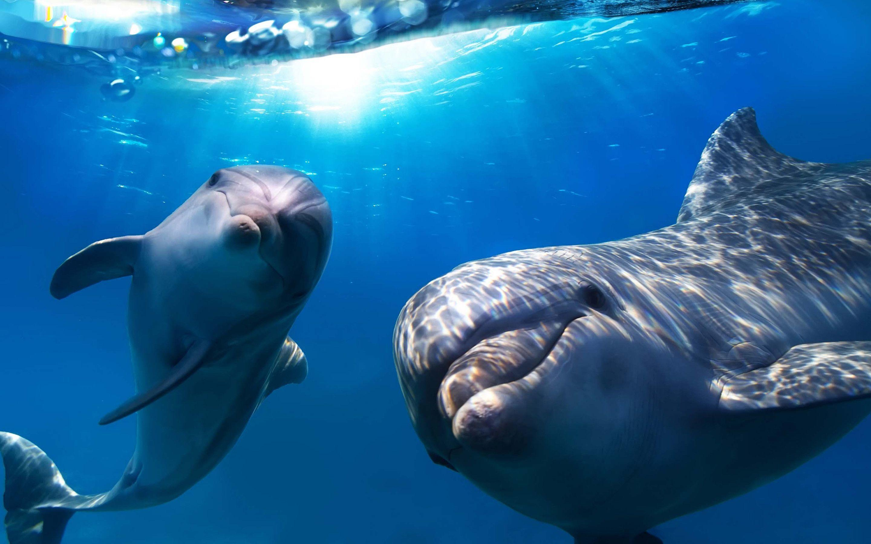 Dolphin Wallpapers - Full HD wallpaper search